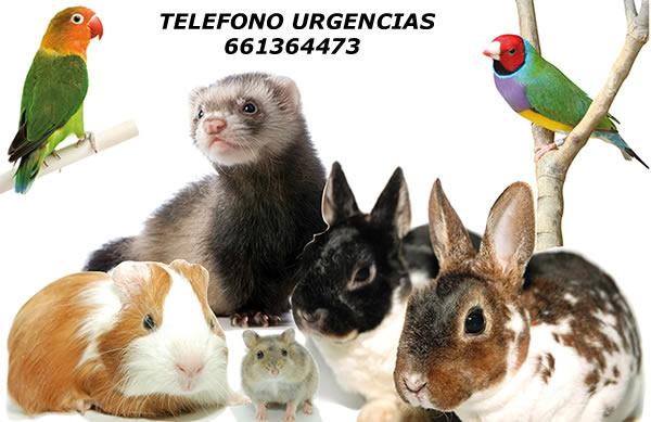 Veterinario Exóticos: Veterinario Exoticos, Madrid, Veterinario Animales